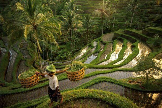 Bali Disko Travel