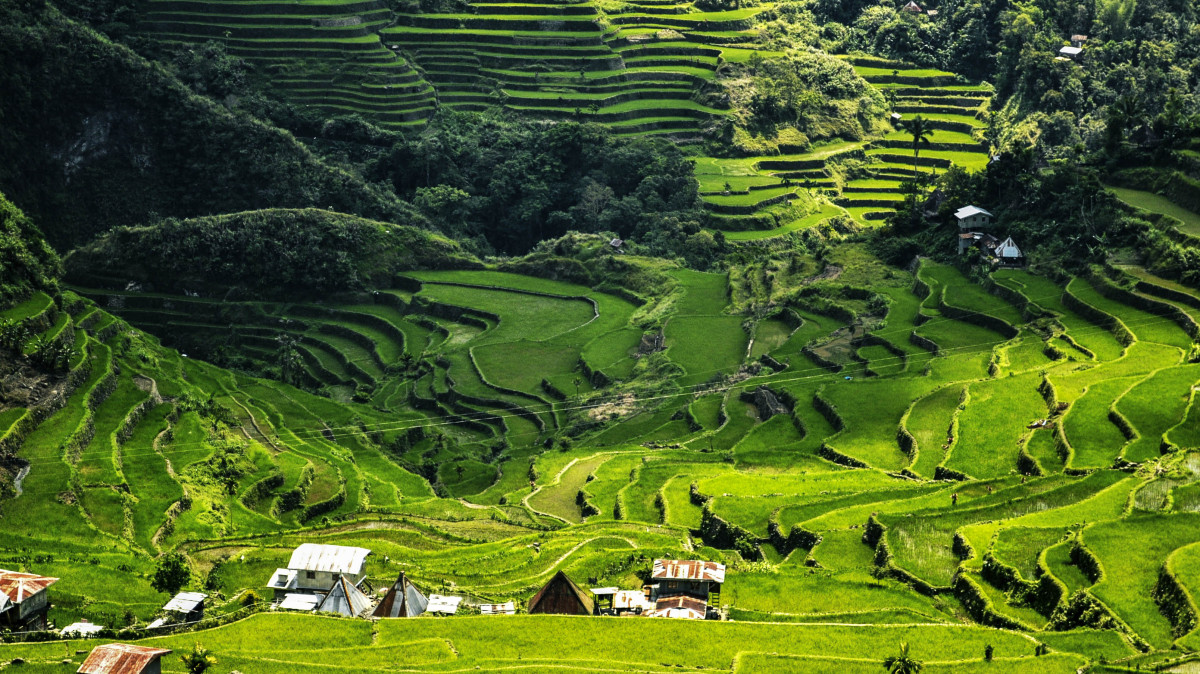Pirincana polja na Filipinima Disko Drugar