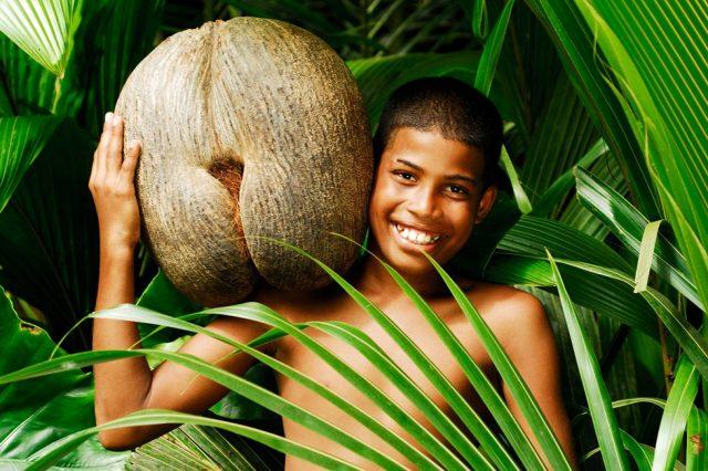Coco de Mer kokos Sejšeli