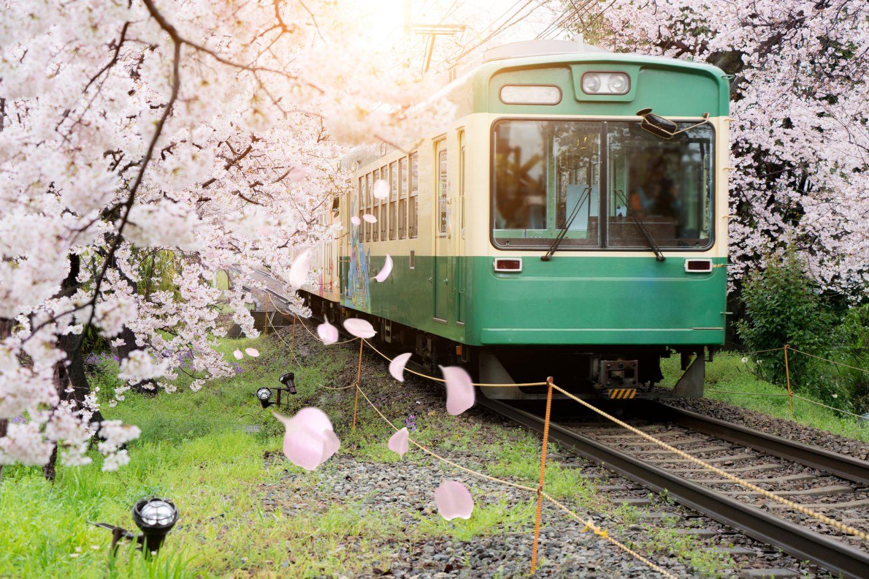Cvetanje tresnje Japan Disko Drugar