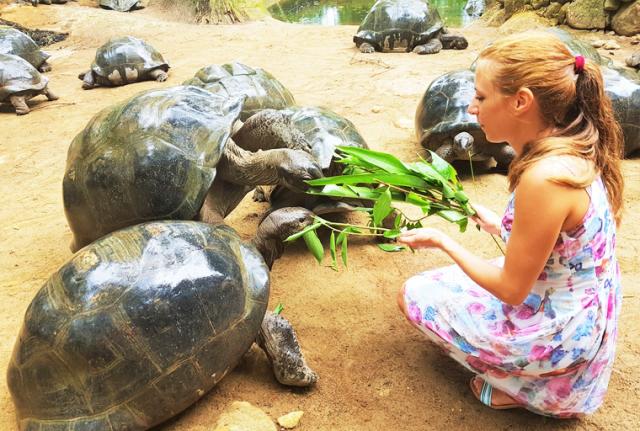 dzinovske-kornjace-na-Sejselima-Disko-Travel