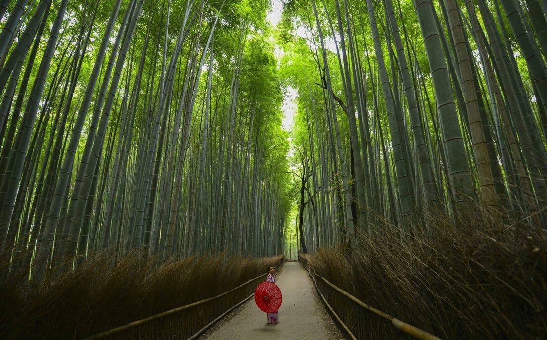 Suma Bambusa u Kjotu Disko Drugar